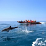dolphin-watching-and-cave-tour-from-vilamoura-in-quarteira-198184