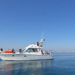 half-day-reef-fishing-from-vilamoura-in-quarteira-206298