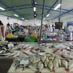 quarteirafishmarket